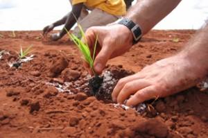 inicio03-Horticultura-Etica