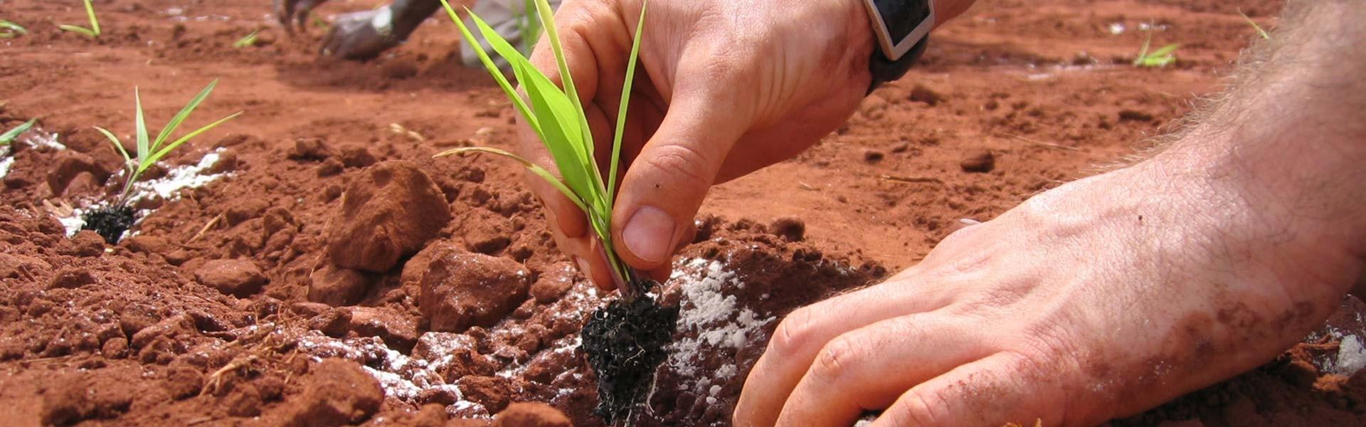 slide02-Horticultura-Ética