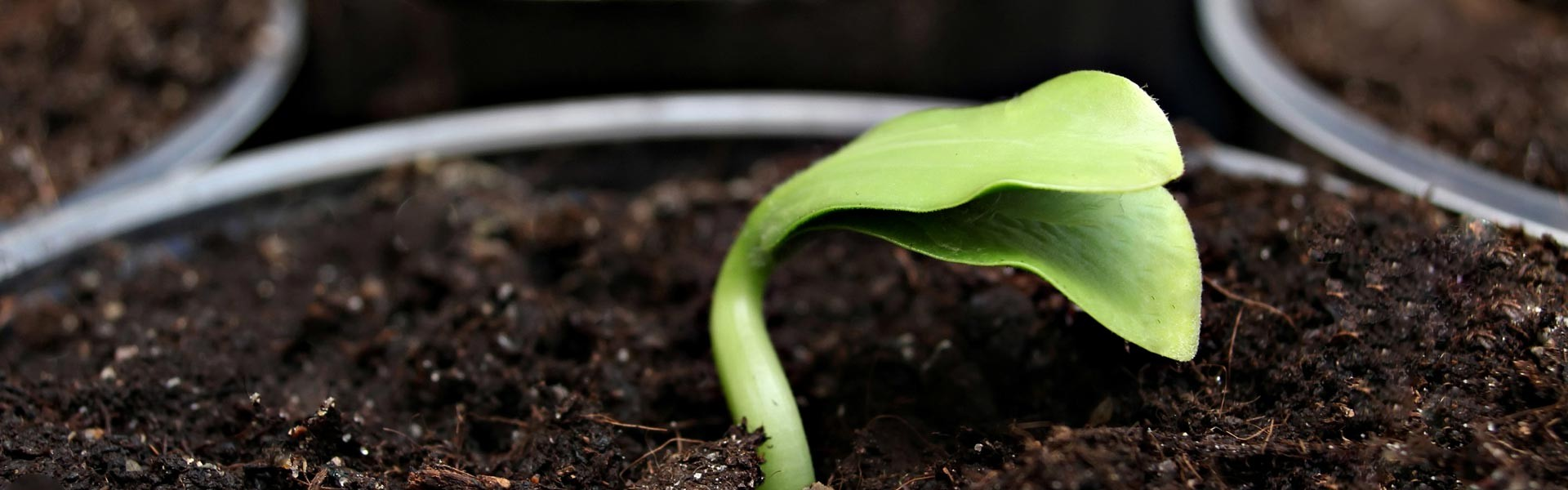slide03-Horticultura-Ética